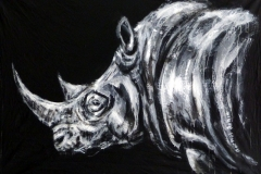 Rhino in the dark