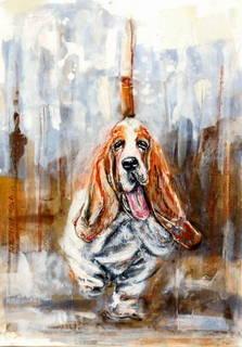 6 basset hound