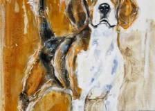6 beagle